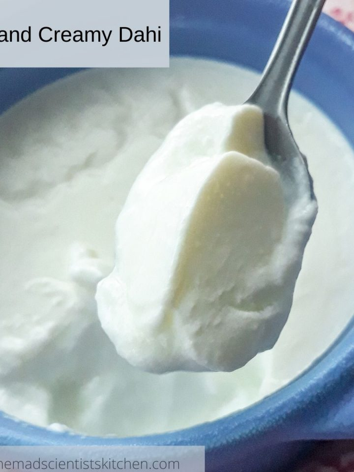 Homemade Indian Yogurt, Dahi